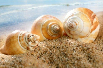 Coming Out Of Your Shell | Ashwood Therapy Blog
